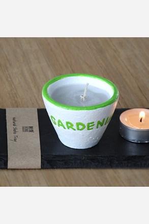 Gardenia gyertya